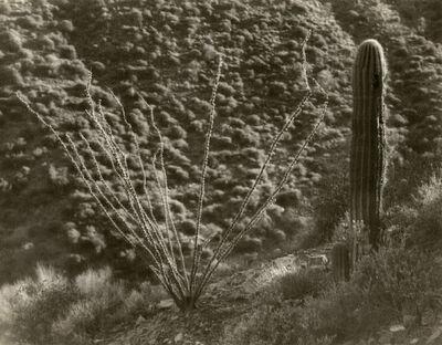 Forman Hanna, 'Desert Flora', 1920-1929