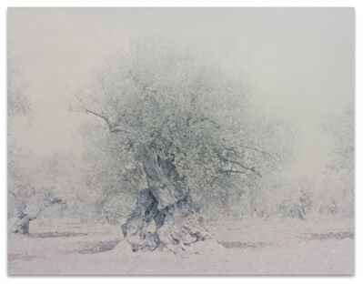 Ori Gersht, 'Olive 16', 2004