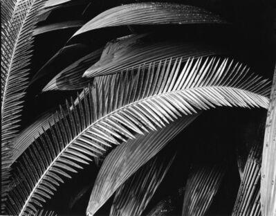 Brett Weston, 'Palms, Bronx Botanical Garden', 1944