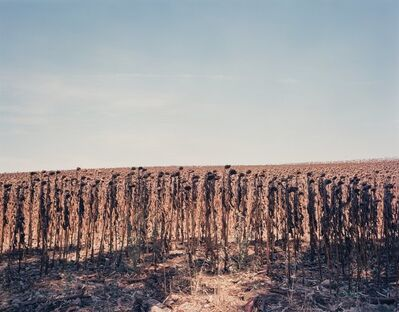 Tod Papageorge, 'Five Views of Spanish Landscapes (5 works)', 1989