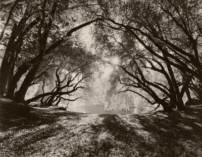Robert Taylor, 'Woods in Morning Light', 2013