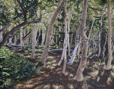 Garrett Middaugh, 'Aspen Forest'