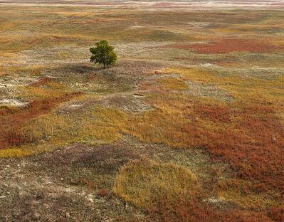 Andrew Moore, 'Autumn Grasses, Sheridan County, Neb.', 2011
