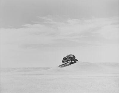 Robert Taylor, 'California Oak and Hills', 2015