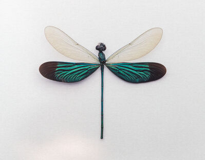 John Woolf, 'Broadwing Damselfly', 2015