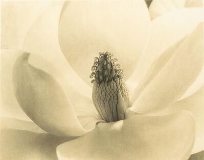 Imogen Cunningham, 'Magnolia Blossom'