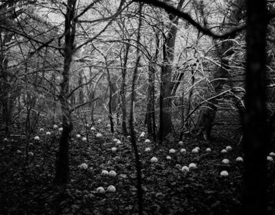 Daniel Coburn, 'Scattering Seeds', 2014