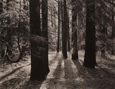 Ansel Adams, 'Forest Floor, Yosemite', ca. 1950