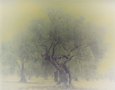 Ori Gersht, 'Olive 3', 2003