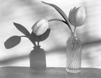 James Pitts, 'Two White Tulips in Wavy Clear Bottle with Shadows', 2020