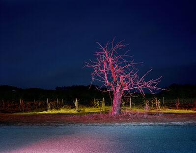 Gerard Byrne (b. 1969), 'Route ˆ la Campagne, avec Arbre. Soir. Au sud du vignoble des Bonnelly, en direction du Nord Est, ˆ travers un champ de vignes entre Les Petite Verrière et St Sers', 2008