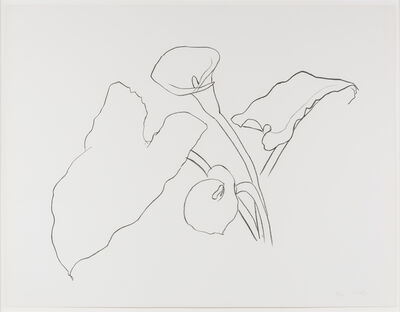 Ellsworth Kelly, 'Calla Lily I, from the Series of Plant and Flower Lithographs', 1983-1986