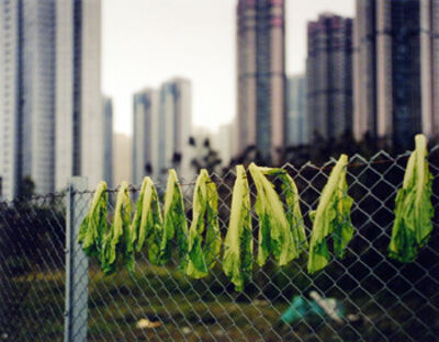 Michael Wolf (b. 1954), 'Drying Salad Leaves, Hong Kong', 2004