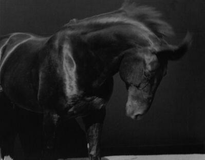 Sheila Rock, 'Horse #43'