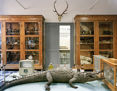 Richard Barnes, 'Tasso Alligator Rome', 2006