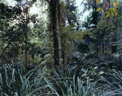 Thomas Struth, 'Paradise 7, Daintree, Australia', 1998