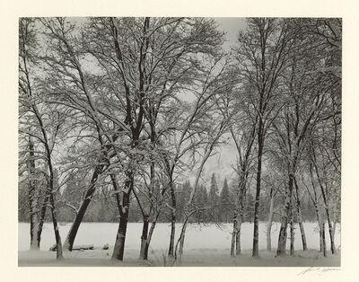 Ansel Adams, 'Young Oaks, Winter ', 1935