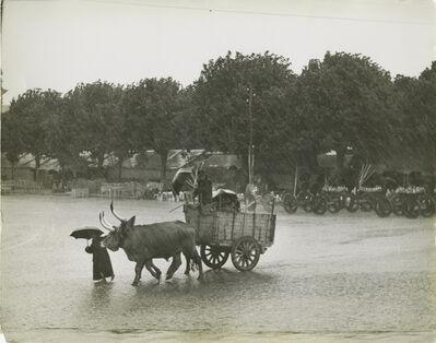Ormond Gigli, 'Oxen in the Rain, Portugal, Barcellos', 1952