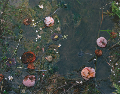 Tanya Marcuse, 'Fallen #89', 2012