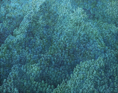 Ikeda Manabu, 'Green Expressions', 2019
