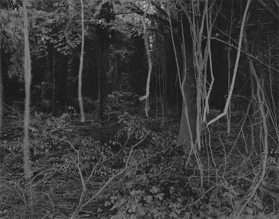 Gilbert Fastenaekens, 'Untitled #001', 1988-1996