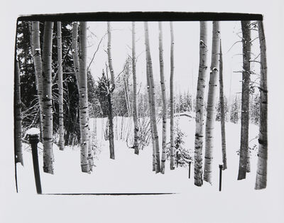 Andy Warhol, 'Birch Trees in Aspen', 1979