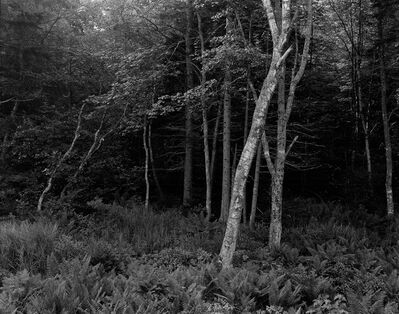 George Tice, 'Woods, Port Clyde, Maine', 1970