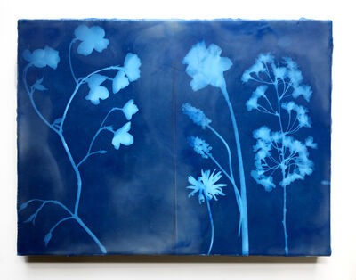Julia Whitney Barnes, 'Botany of Poughkeepsie/Cyanotype 2', 2019