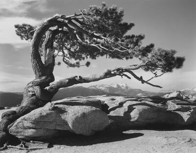 Ansel Adams, 'Jeffrey Pine, Sentinel Dome', 1940/printed later