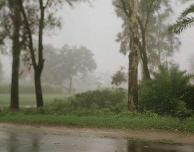 Hannah Collins, 'Life on film (rain and trees) ', 1999-2013