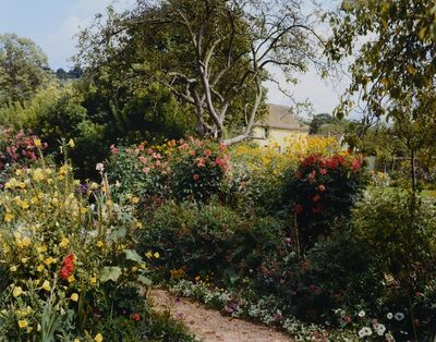 Stephen Shore, 'Red Chrysanthamums by path', 2002