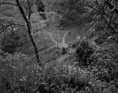 Amelia Stein, 'Garden, Laragh', 2020