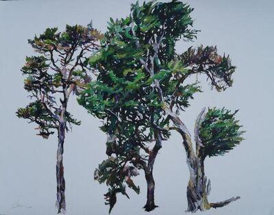 Patricia Cain, 'Study of Three Trees', 2017