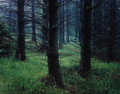 Eliot Porter, 'Path in the Woods, Great Spruce Head Island, Maine', 1981
