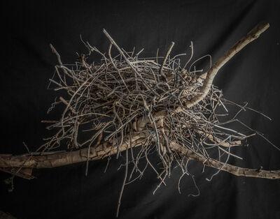 Kate Breakey, 'Nest 11', 2010-2019