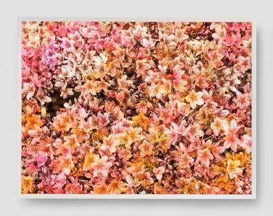 Trevor Paglen, 'Bloom (#b8816a)', 2021