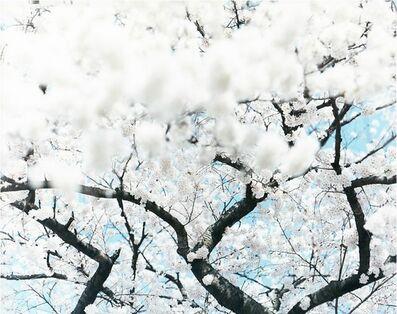 Risaku Suzuki, 'SAKURA 10,4-64', 2010