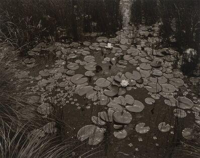 George A. Tice, 'Aquatic Plants #1, Saddle River, New Jersey', 1967-1976