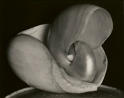 Edward Weston, 'Two Shells', 1927