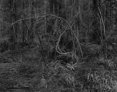 Gilbert Fastenaekens, 'Untitled #018', 1988-1996