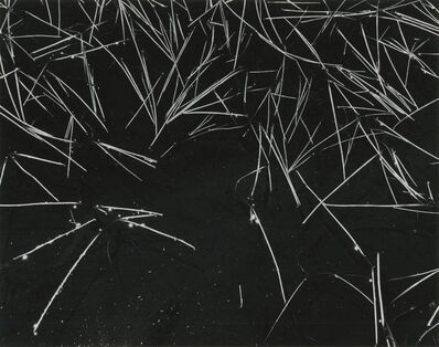 Ansel Adams, 'Grass and Pool', 1935