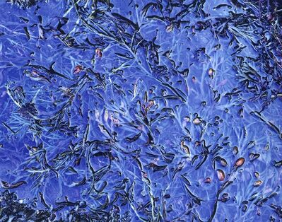 Christopher Burkett, 'Blue Melange, Maine', 1994