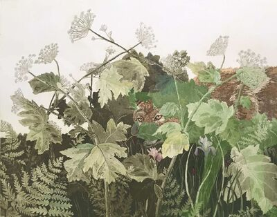 Julia Lucey, 'Coyote in cow parsnip, wood fern and luis', 2015