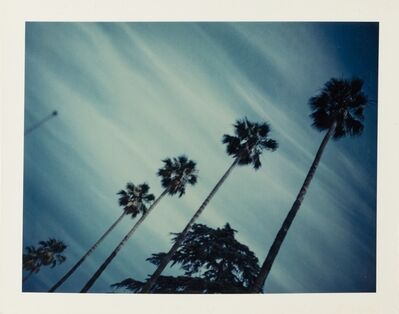 Wim Wenders, '»Palm Trees, Los Angeles, 1972«', 2018