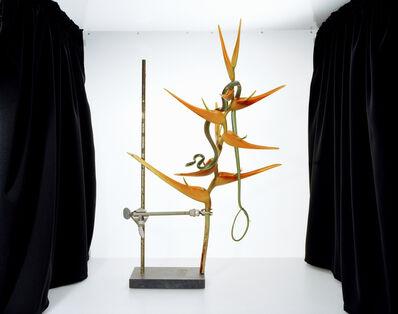 Sanna Kannisto, 'Leptophis ahaetulla', 2006