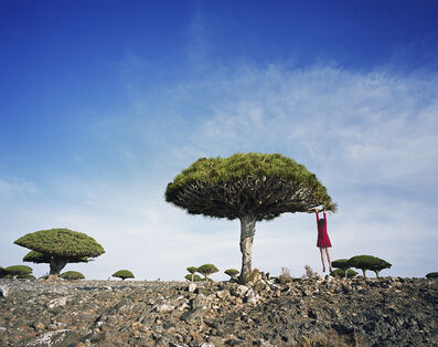 Scarlett Hooft  Graafland, 'Dragon's Blood', 2014