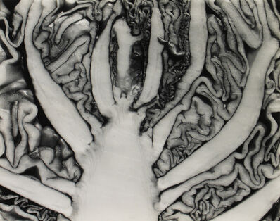 Edward Weston, 'Red Cabbage Halved', 1930