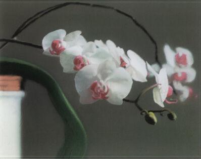 Gerhard Richter, 'Orchidee II (Butin 103)', 1998