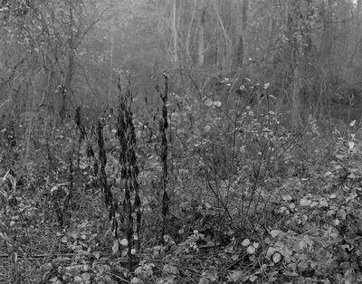 Gilbert Fastenaekens, 'Untitled #012', 1988-1996