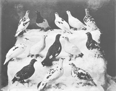 Beverly Bennett Dobbs, 'Birds', 1903-1906